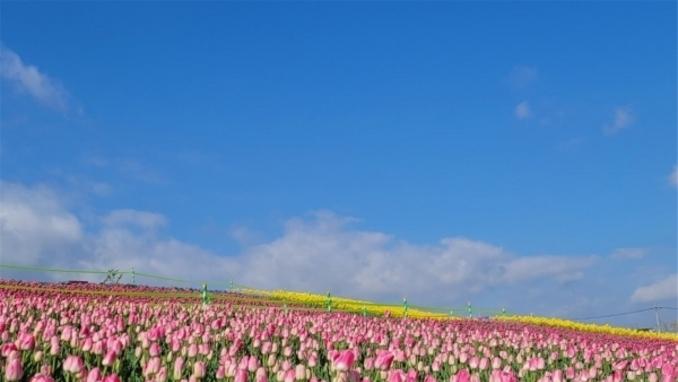 평택시농업생태원, 평택 꽃 나들이 시민의 힐링장소 역할 '톡톡'